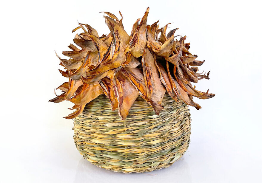 dracaena vase