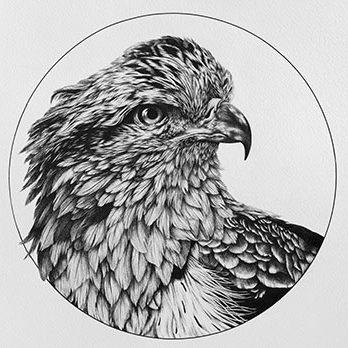 holly_bird
